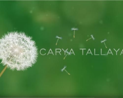 Carya Tallaya – Casas de Campo_19