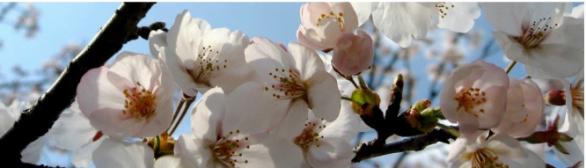 Cerejeiras e Pessegueiros em Flor na Rota do Zêzere