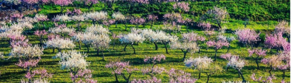 Amendoeiras em Flor e Aldeias Históricas…03 de Março!!!