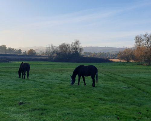 Os nossos cavalos